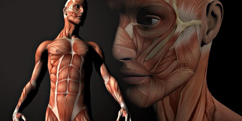 cuerpo-humano